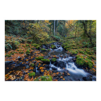 Autumn Leaves Scattered Along Gorton Creek Poster