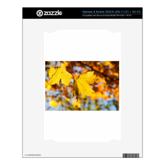 Autumn Leaves NOOK Decal