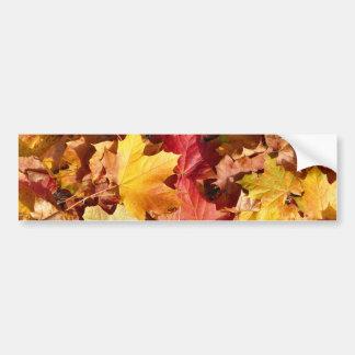 Autumn leaves - Stunning! Car Bumper Sticker