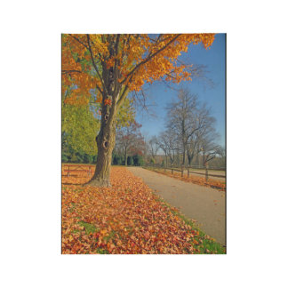 Autumn Leaves Wood Poster