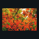 """Autumn Leaves Wrapped Canvas<br><div class=""""desc"""">Photograph of brightly colored red and orange leaves.</div>"""