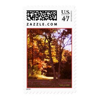 Autumn Light Postage Stamp
