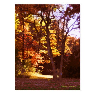 Autumn Light Postcard