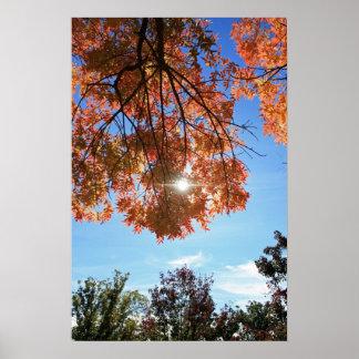 """""""Autumn Light"""" Poster"""