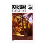 Autumn Light Stamp