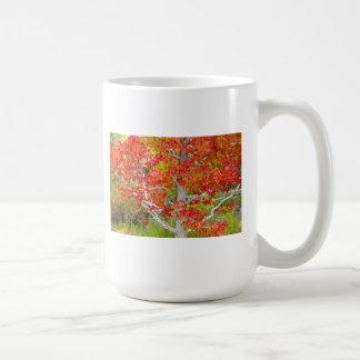 Autumn - Liquid Amber Tree Coffee Mug
