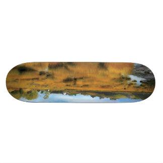 Autumn Low Tide Custom Skateboard