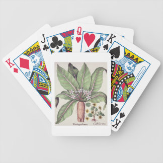 Autumn Mandrake, from the 'Hortus Eystettensis' by Bicycle Poker Cards