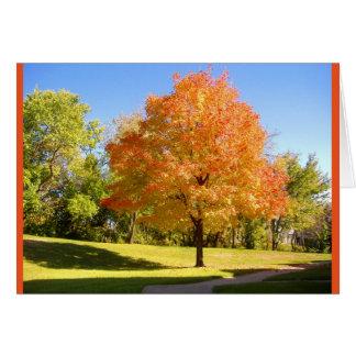 Autumn Maple. Card