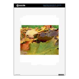 AUTUMN MAPLE iPad 3 DECALS