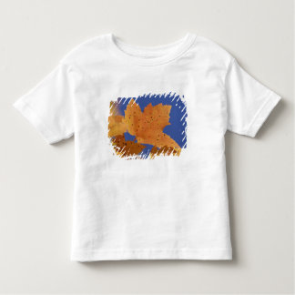Autumn maple leaf and blue sky, White Toddler T-shirt