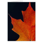 Autumn Maple leaf on black background Cards