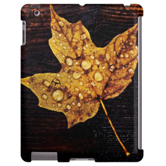 autumn maple leaf with rain drops