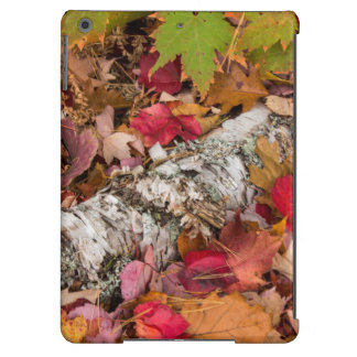 Autumn Maple Leaves Cover Birch Bark On Forest