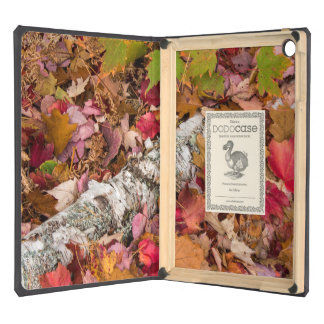 Autumn Maple Leaves Cover Birch Bark On Forest iPad Air Cases