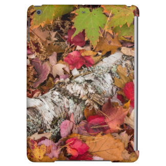 Autumn Maple Leaves Cover Birch Bark On Forest Case For iPad Air