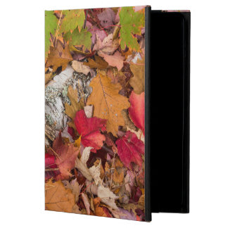 Autumn Maple Leaves Cover Birch Bark On Forest iPad Air Case