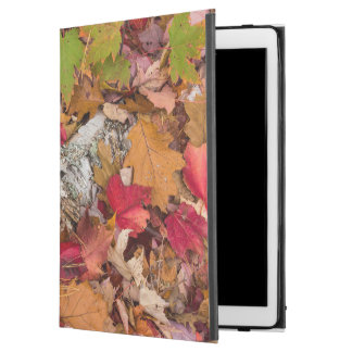 Autumn Maple Leaves Cover Birch Bark On Forest iPad Pro Case