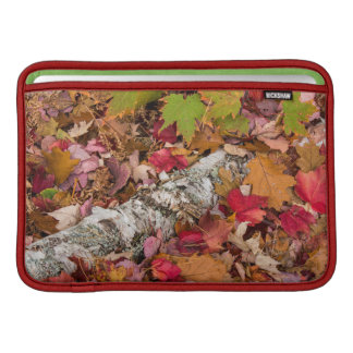 Autumn Maple Leaves Cover Birch Bark On Forest MacBook Sleeves