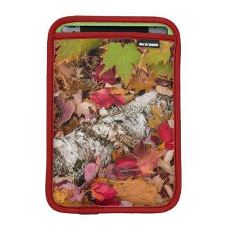 Autumn Maple Leaves Cover Birch Bark On Forest iPad Mini Sleeve