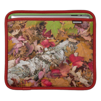 Autumn Maple Leaves Cover Birch Bark On Forest Sleeves For iPads