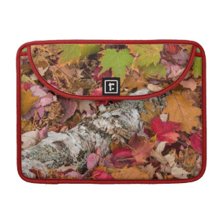 Autumn Maple Leaves Cover Birch Bark On Forest MacBook Pro Sleeve