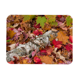 Autumn Maple Leaves Cover Birch Bark On Forest Flexible Magnets