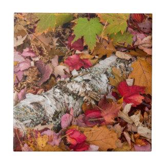 Autumn Maple Leaves Cover Birch Bark On Forest Tile