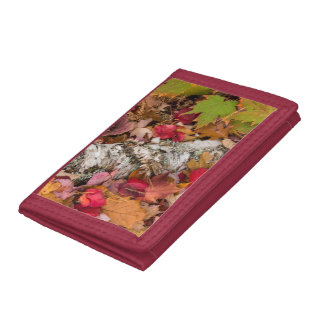 Autumn Maple Leaves Cover Birch Bark On Forest Tri-fold Wallet