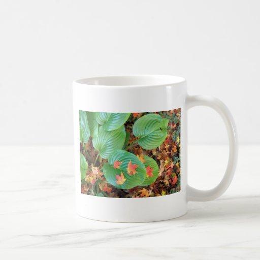 Autumn Maple Leaves on Hosta Coffee Mug