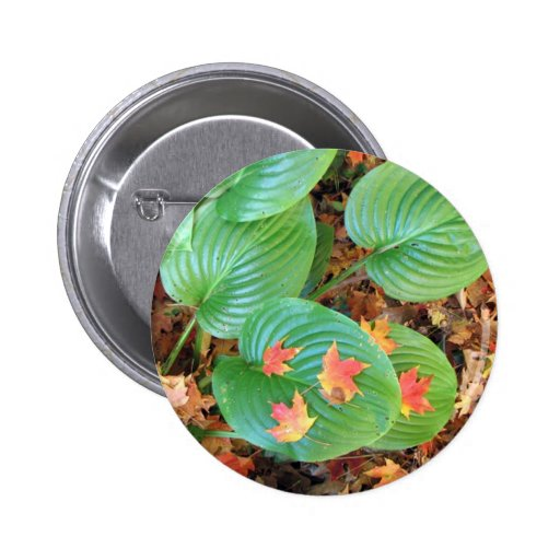 Autumn Maple Leaves on Hosta Pinback Buttons