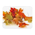 Autumn maple leaves rectangle magnet