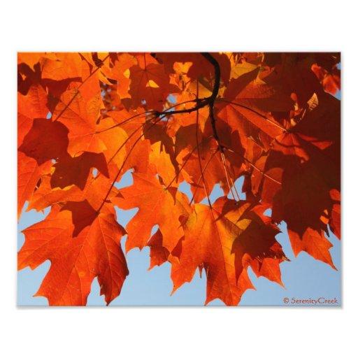 Autumn Maple Print Photo