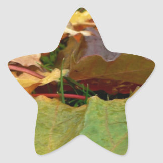 AUTUMN MAPLE STAR STICKER