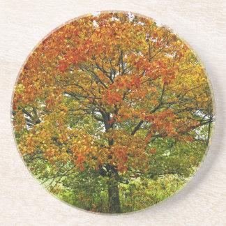Autumn maple tree coaster