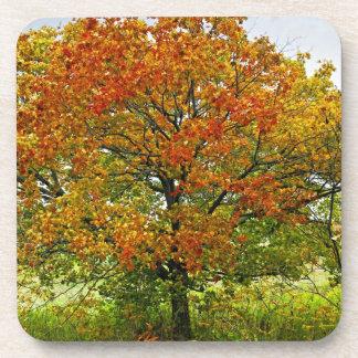 Autumn maple tree beverage coasters