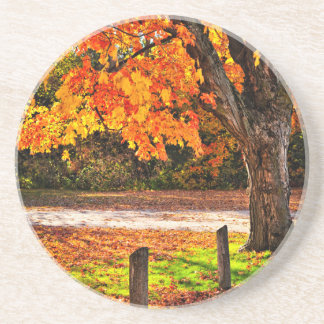 Autumn maple tree near road drink coaster