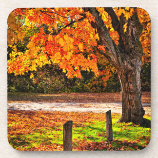 Autumn maple tree near road drink coasters