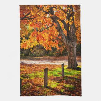 Autumn maple tree near road kitchen towel