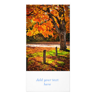 Autumn maple tree near road photo card template