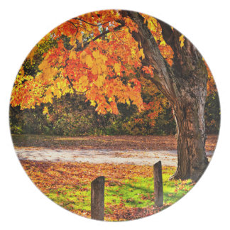 Autumn maple tree near road dinner plates
