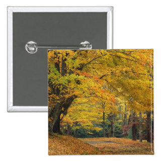Autumn maple tree overhanging country lane, 2 inch square button