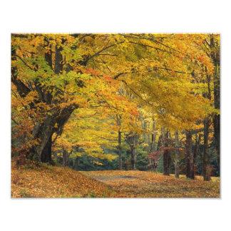 Autumn maple tree overhanging country lane, photo print
