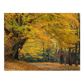 Autumn maple tree overhanging country lane, postcard