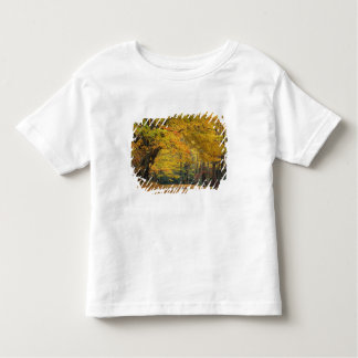 Autumn maple tree overhanging country lane, toddler t-shirt