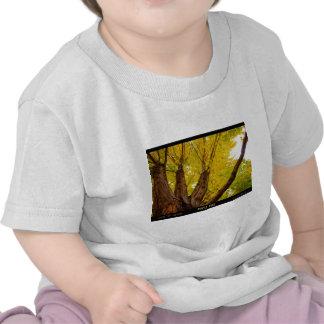 Autumn Maple  Tree - Poster T-shirts