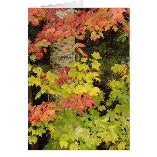 Autumn maple trees and birch tree, White Card
