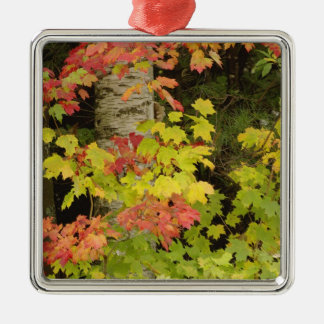 Autumn maple trees and birch tree, White Metal Ornament