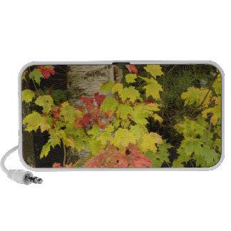 Autumn maple trees and birch tree, White Mini Speakers