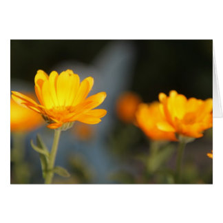 Autumn Marigold Card